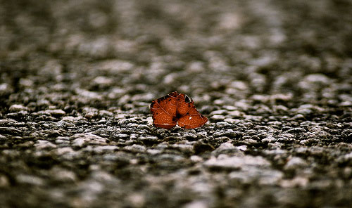 Small Leaf Big World
