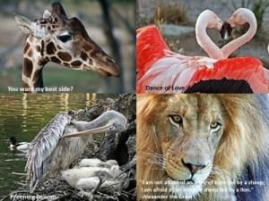 Wild Animals, year 4