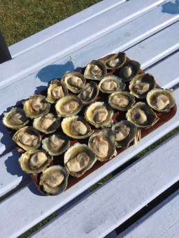 Fowler Oysters