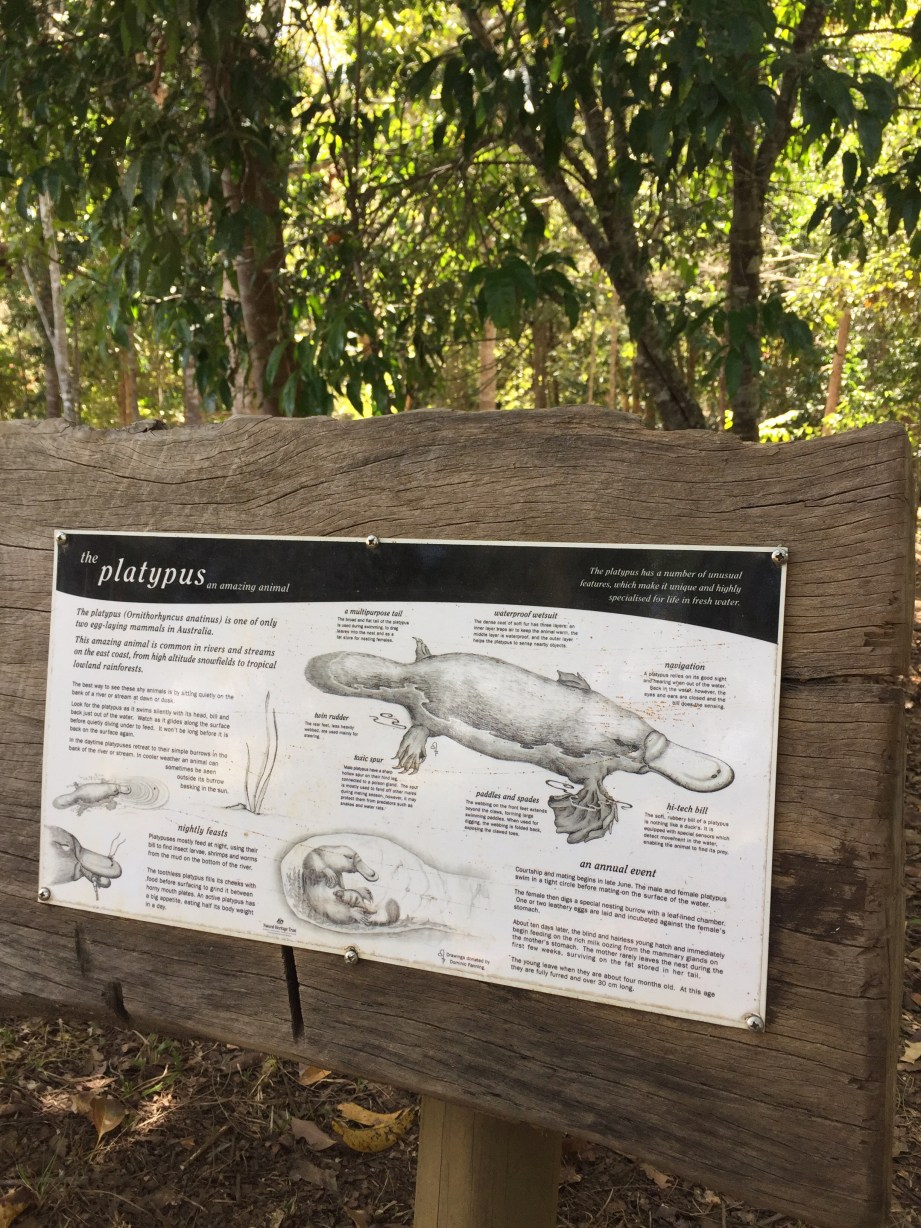 platypus viewing platform