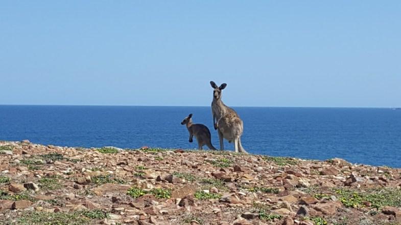 Moonee Beach Nature Reserve