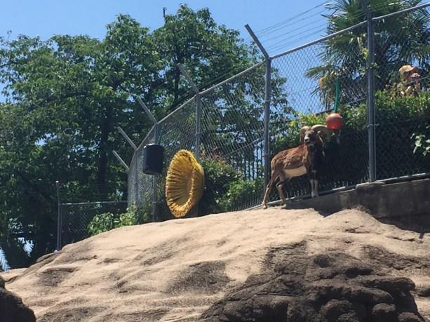 大阪動物園