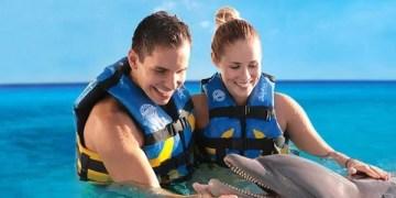 Dolphin Discover Los Cabos