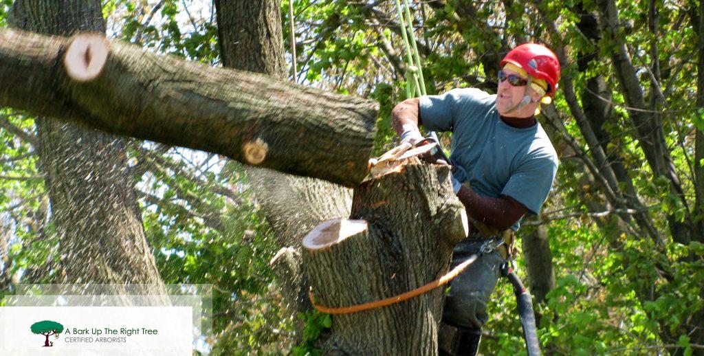 Tree Removals