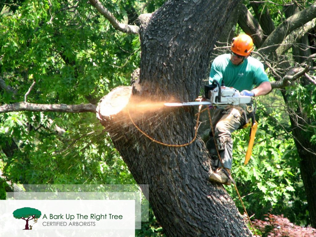 Tree Removing Adelaide