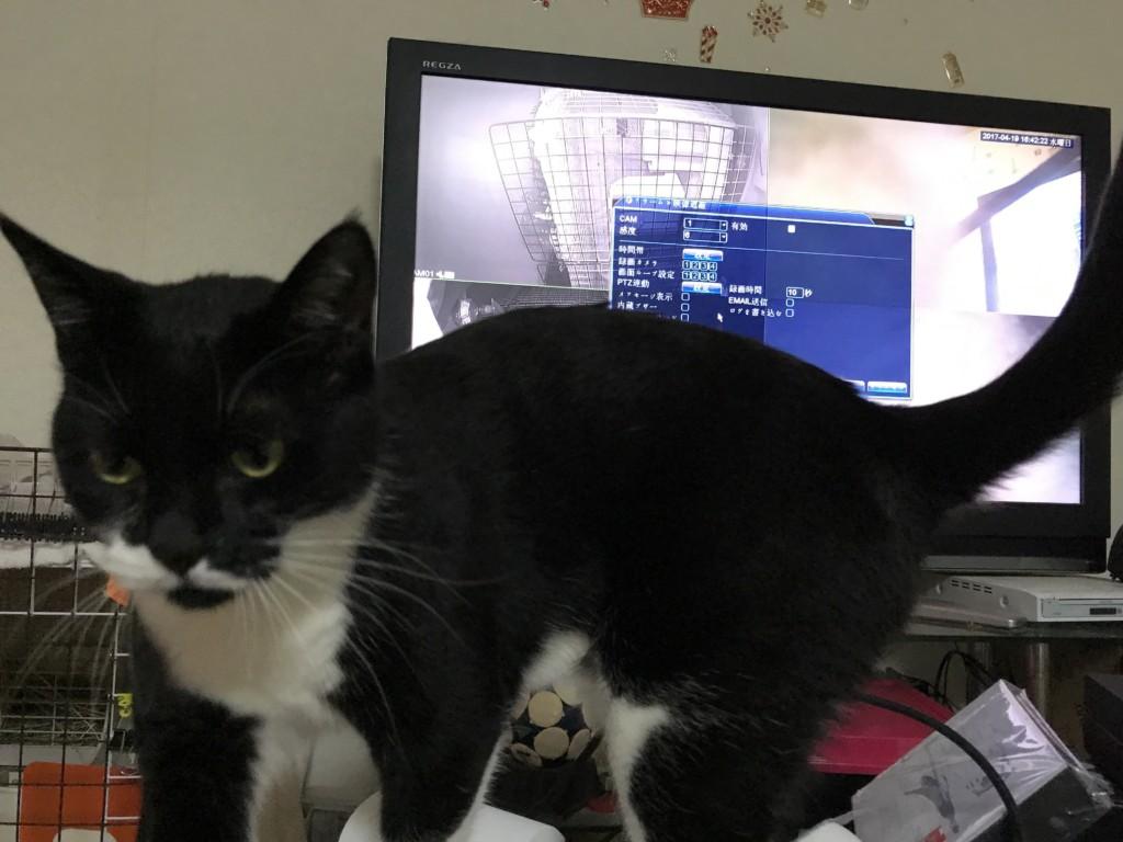 A-ZONEの防犯カメラセットに興味津々の猫さん