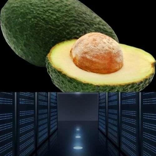 Web Hosting Company for avocado fruit