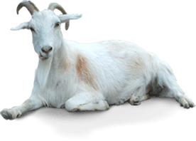 Goat Icon Clipart Web Icons PNG