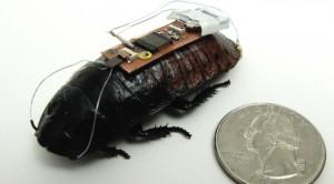 cucaracha2