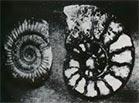 fossiele dieren,