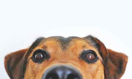 Denkt u aan het aan- of afmelden van uw hond?