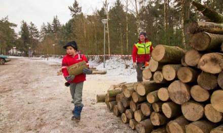 Houtdagen bij Staatsbosbeheer in Noord-Overijssel