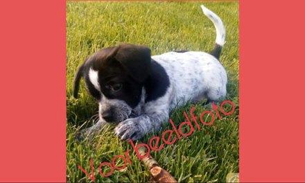Meer informatie gevraagd over hondje