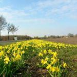 GroenLinks en ChristenUnie stellen vragen over bermbeheer Overijssel