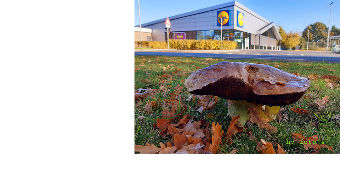 Enorme paddenstoel