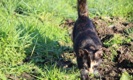 Kitten gevonden Conradsweg/Postweg