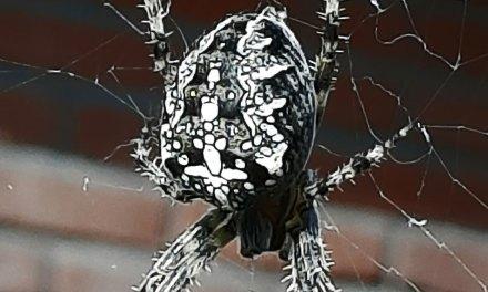 De spannendste spin en de mooiste paddenstoel gevonden!
