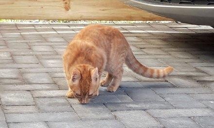 Van wie is deze kattenhalsband?