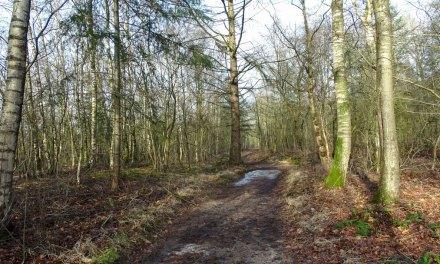 Van een halve zool in een winters bos