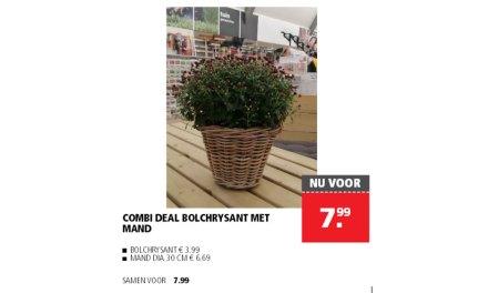 Combi deal bij Welkoop (Bolchrysant met mand)
