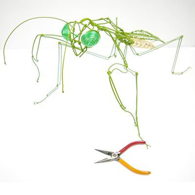 頑固自在昆虫