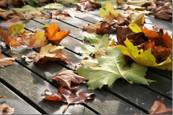 mooie-herfst-kleuren.1354994604-van-natuurlijk
