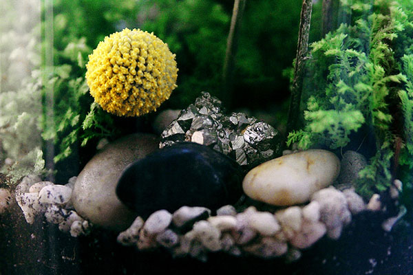 nicole-balch-west-elm-terrarium-mothers-day-diy-project-plant-gift-cute-making-lovely-fools-gold-pyrite