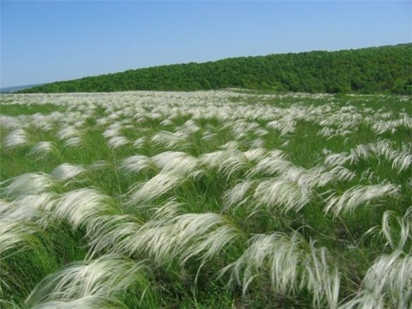 Типичные растения степи. Растительный мир зоны степей ...