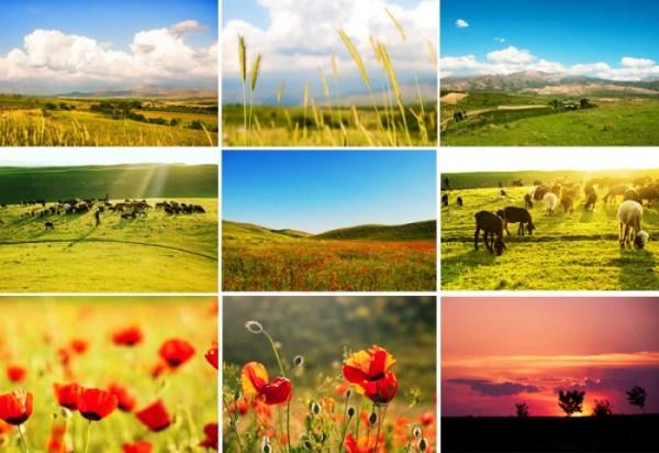 Животные и растения Узбекистана: описание, фото природы ...