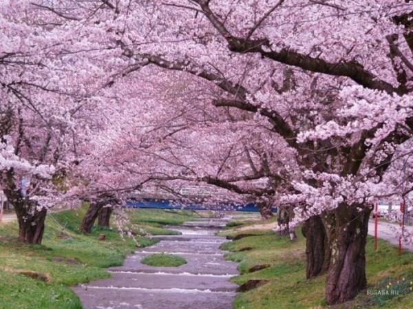 Животные и растения Японии описание фото