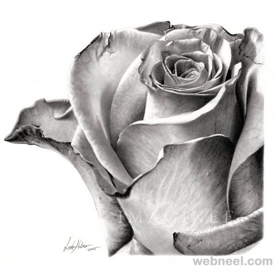 4 flower drawing rose