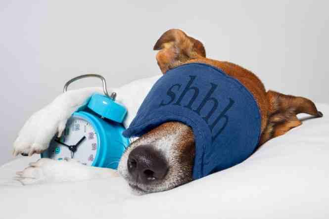 Dog Themed Clocks Webnuggetz