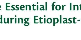 共同研究の論文がPlant Cell Physiology誌に採択されました