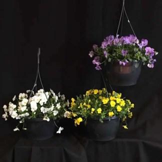 Hanging basket met viooltjes (wit/geel/paars