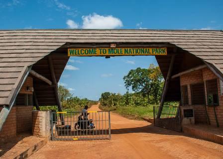 mole national park