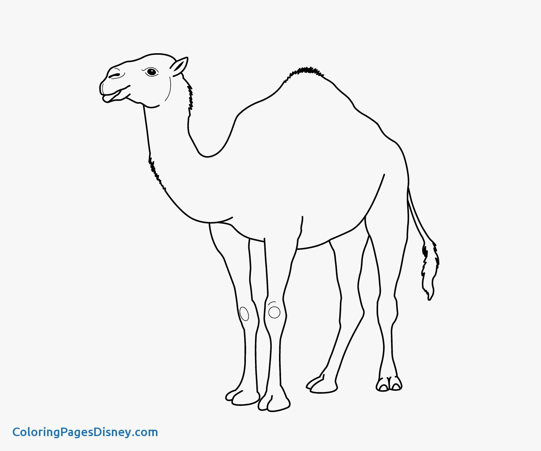 Camel Clipart Printable Camel Printable Transparent Free