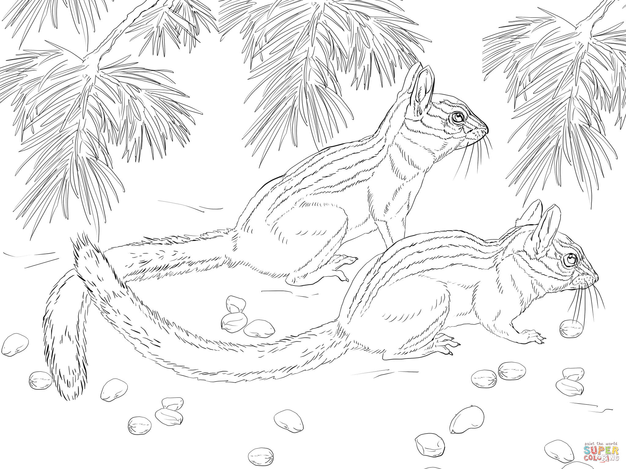 Chipmunk Clipart Coloring Page Chipmunk Coloring Page
