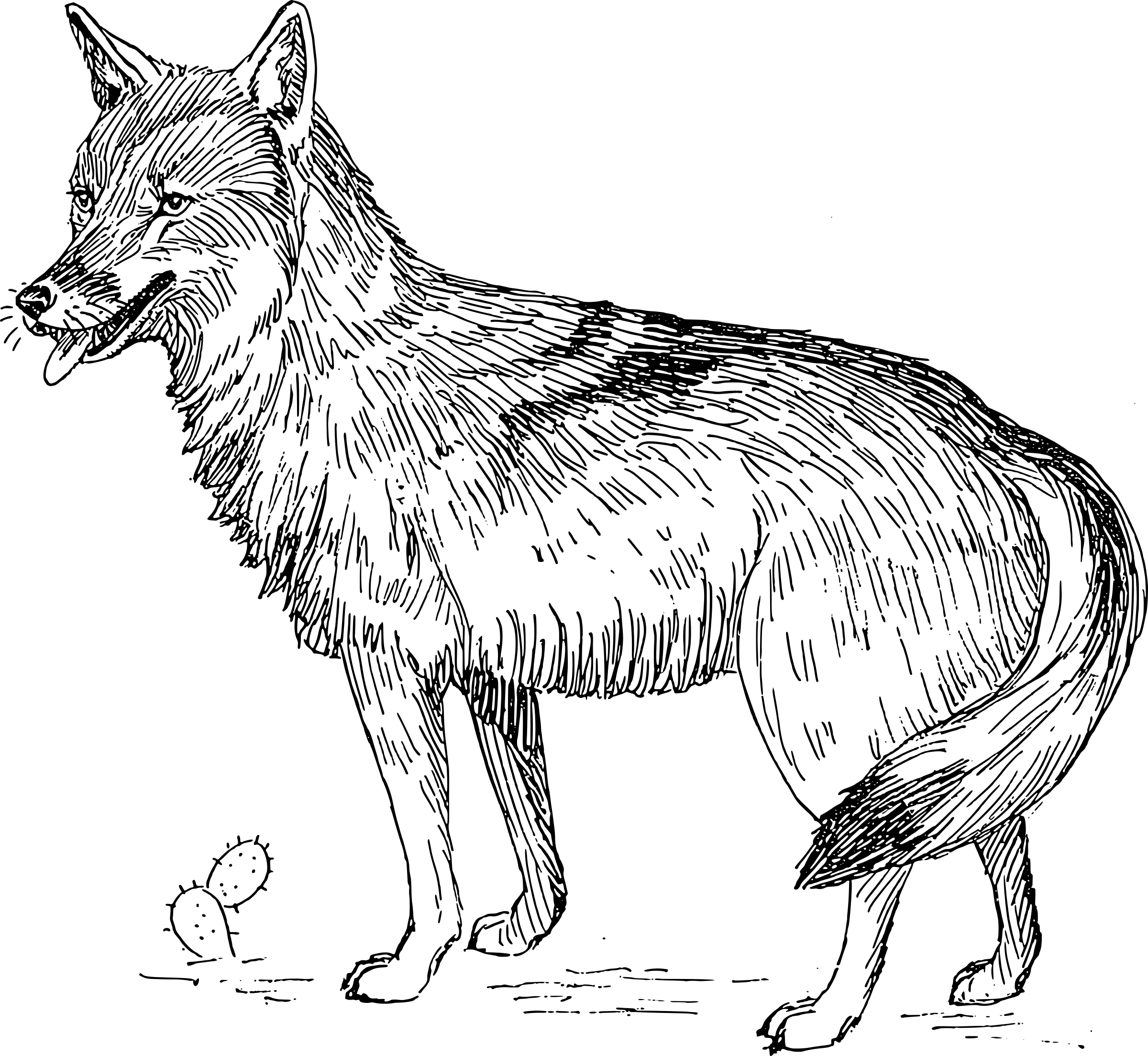Coyote Clipart Svg Coyote Svg Transparent Free For