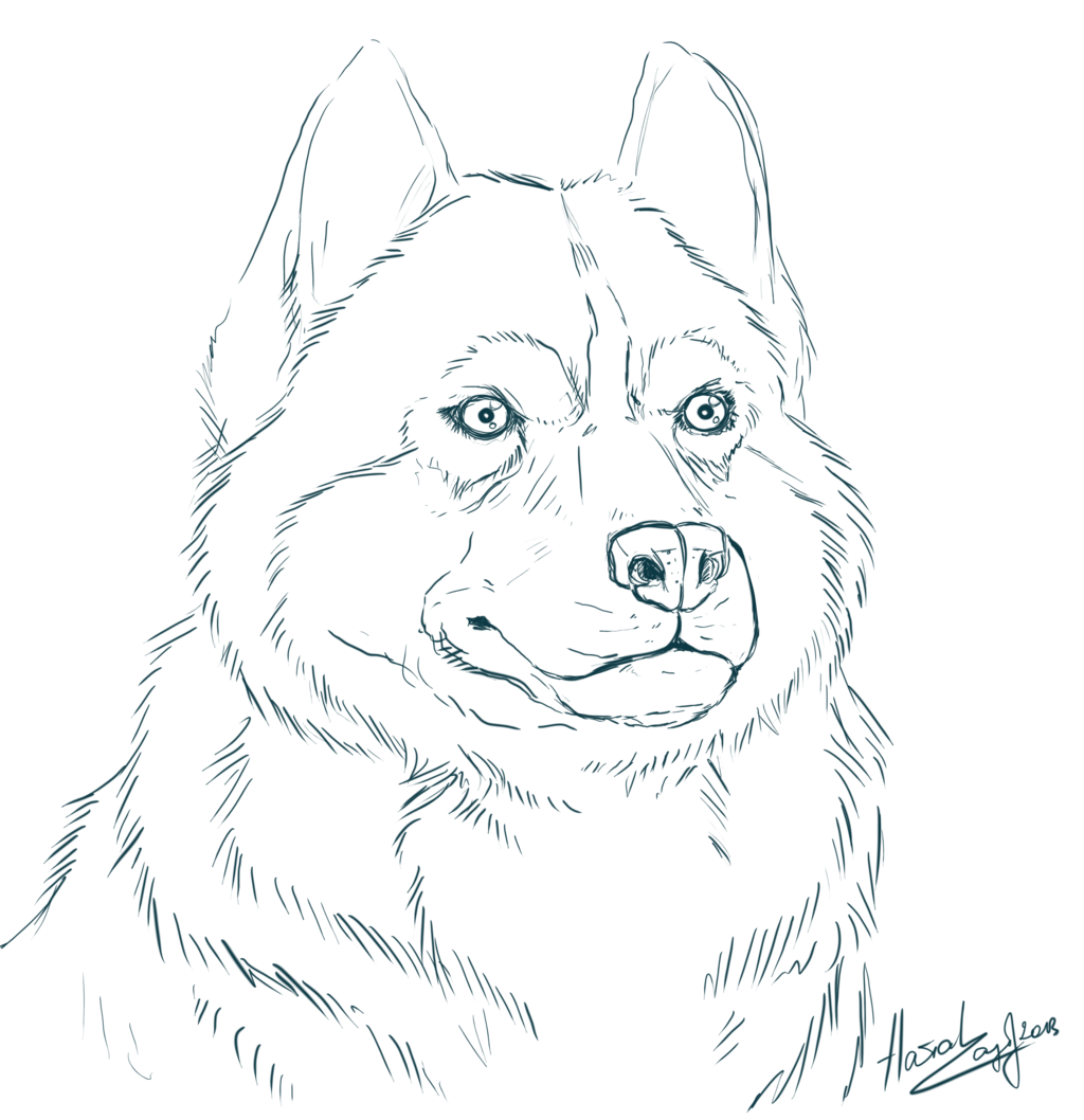 Husky Clipart Coloring Page Husky Coloring Page