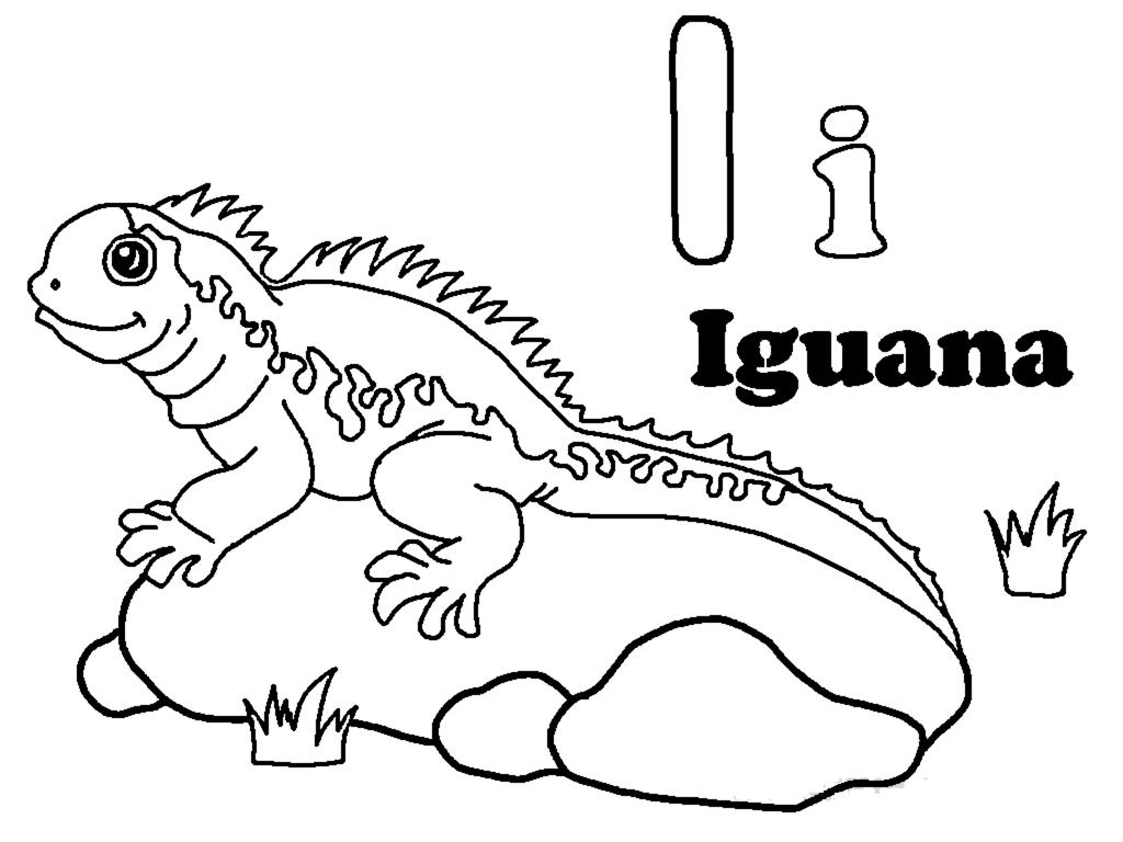 Iguana Clipart Colouring Iguana Colouring Transparent
