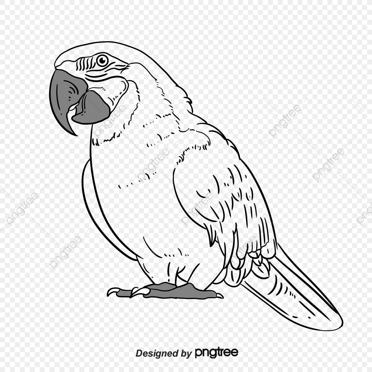 Parrot Clipart Tree Drawing Parrot Tree Drawing