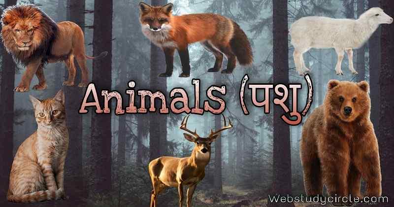 Animals (पशु)