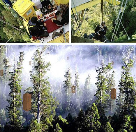 Worlds Highest Environmental Tree House