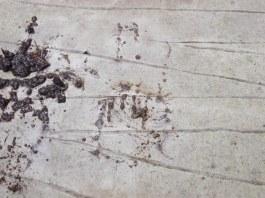 DSCN0586
