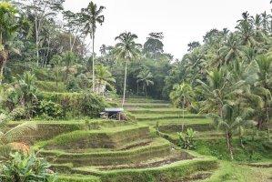 15 razones para viajar a Bali