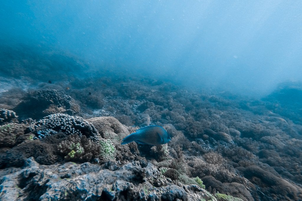 Fondo marino en Gili Trawangan -Lombok, Indonesia