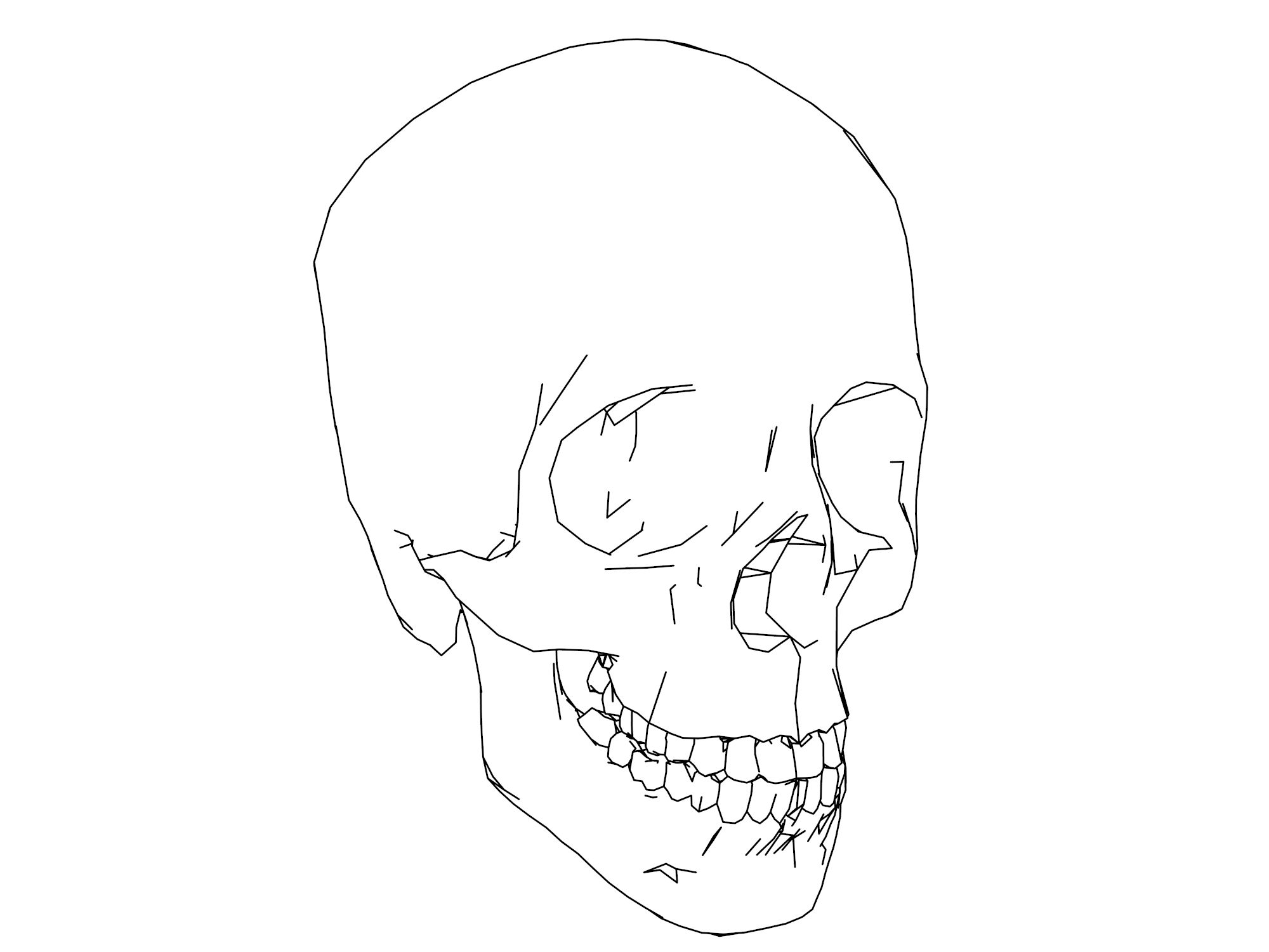 Anatomy And Physiology Coloring Pages Skull