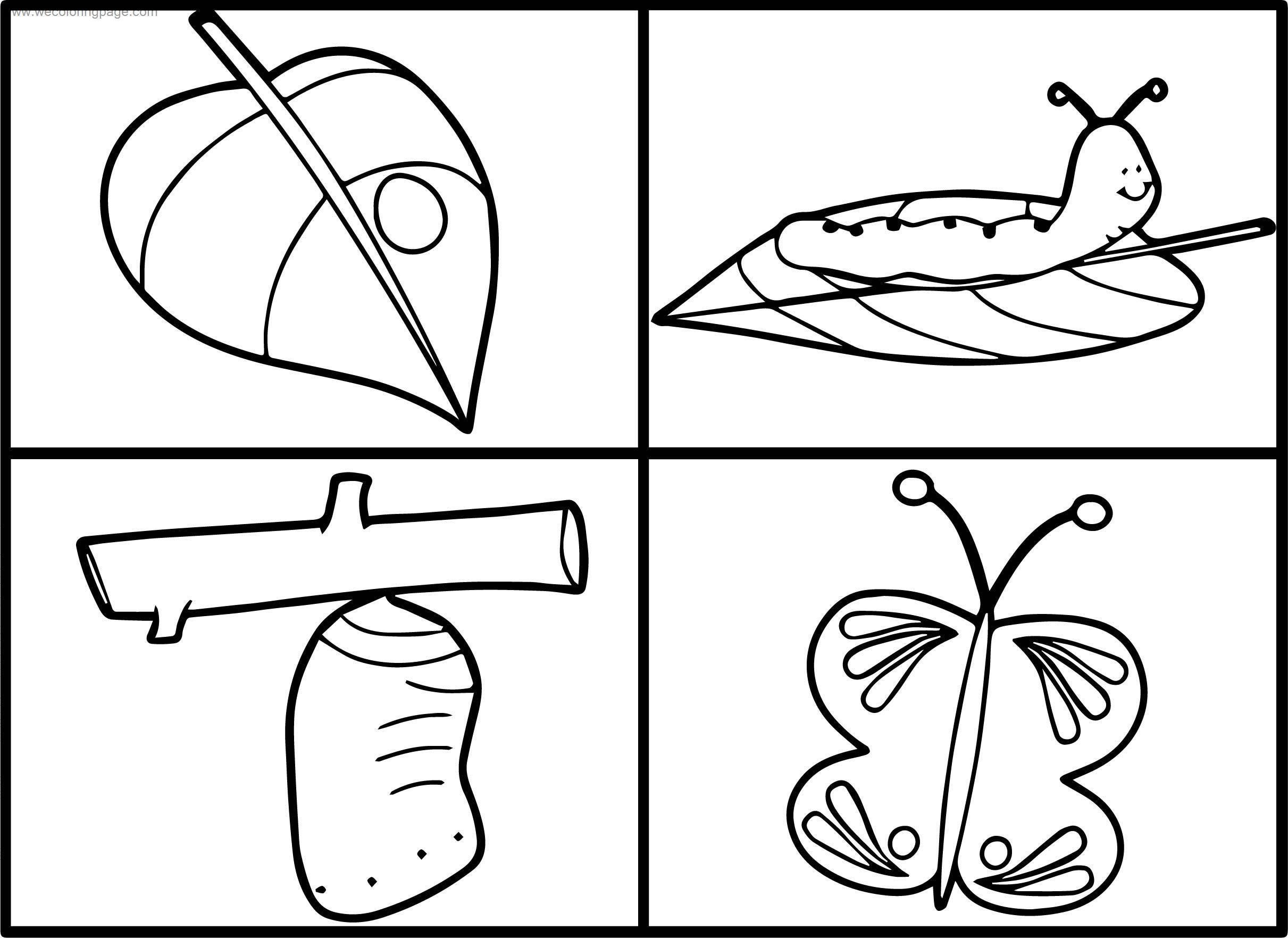 Life Cycle Butterfly Coloring Page