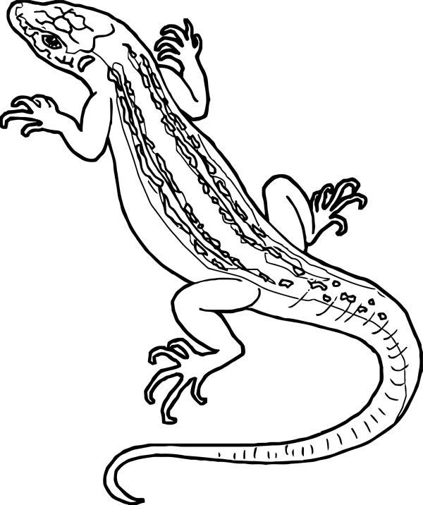 lizard coloring page # 51
