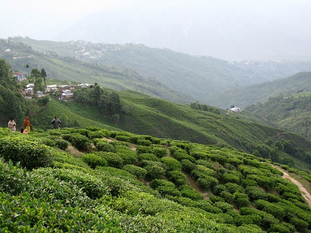 Hill Stations For Honeymoon In India